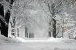 Leinwanddruck Bild - winter storm