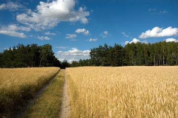 beauty landscape