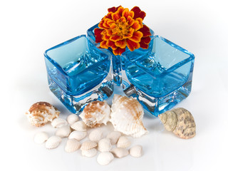 shell and glass