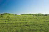 summer hill landscape poster