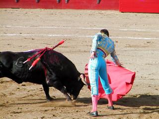 bull charge 2