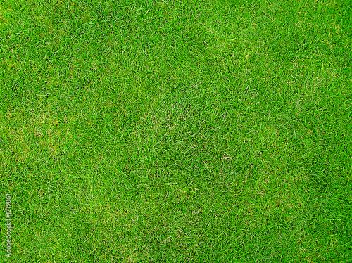 grass - 1219861