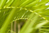 wet palm tree frond and leaves poster