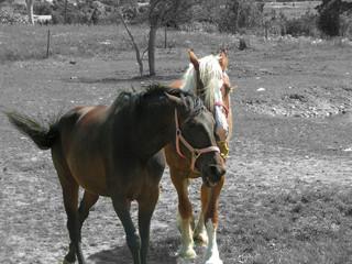 pair of horses 2