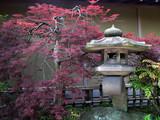 Fototapete Zen - Baum - Andere