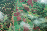 big island aerial shot - rain forest poster