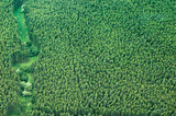 big island aerial shot - eucalyptus rain forest poster