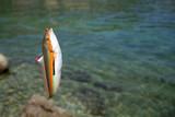 exotic fish poster