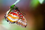 tropical rainforest butterfly poster