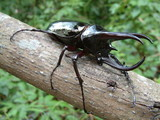 tropical rainforest beetle poster