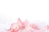 pink rose petal border poster
