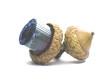 multicolor tourmaline and chesnut