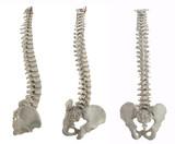 three spines