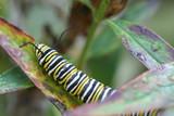 climbing caterpillar poster