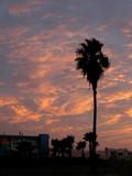 single palm tree sunset poster