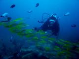 aquarium diver poster