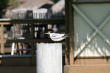 sea bird on a pole poster