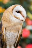 barn owl ii poster