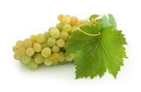 yellow grape cluster poster