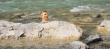 middle-aged man bathing in a cold mountain-stream poster