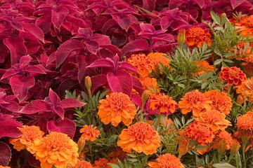 diagonal flowers