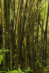 tropical scene - bamboo