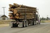 truck load of logs poster