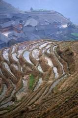 riziere en terrace