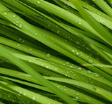 droplets on grass - shallow focus poster