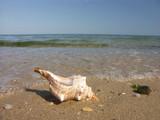 seashell washed ashore poster