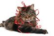 christmas cat 12