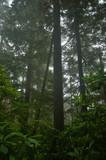 pacific northwest rainforest poster