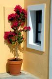 greece island flower pot poster