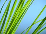 green grass - 1302623