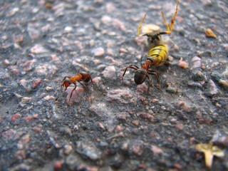 ant and wasp 3