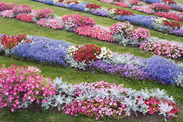 field of flowers-1