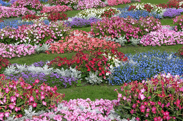 field of flowers-2
