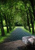rivière et forêt poster