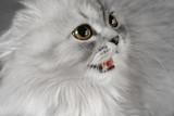 the scared kitten poster