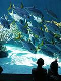 aquarium visit poster