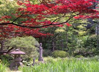 early autumn japanese garden