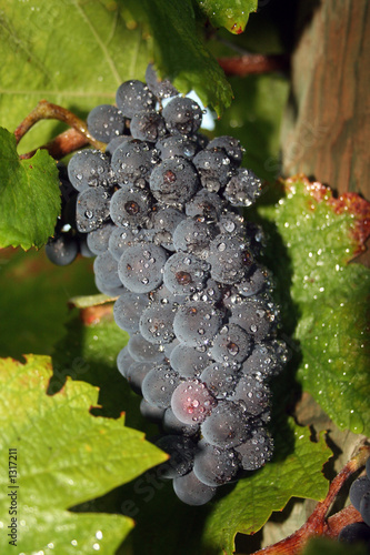 wet grape cluster