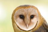 barn owl face poster