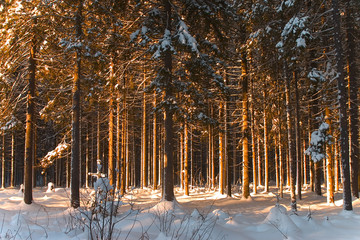 winter forest 10
