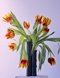 arrangement of tulips poster