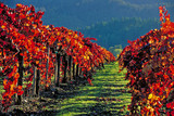 autumn vineyards napa valley