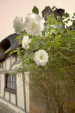 roses outside thatched cottage yelden yielden vill poster