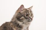 kitten poster