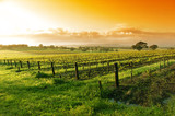 vineyard sunrise - Fine Art prints