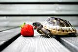 Fototapete Shell - Reprsentationsbau - Haustiere